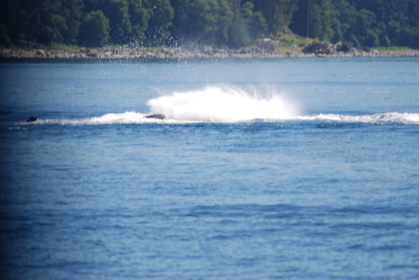 3 Juneau_WhaleWatching (35) by Verryl V Fosnight Jr