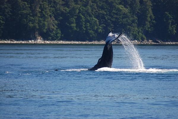 3 Juneau_WhaleWatching (38) by Verryl V Fosnight Jr