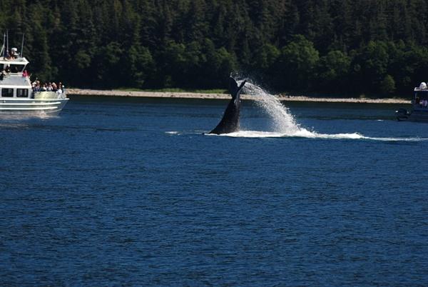 3 Juneau_WhaleWatching (39) by Verryl V Fosnight Jr