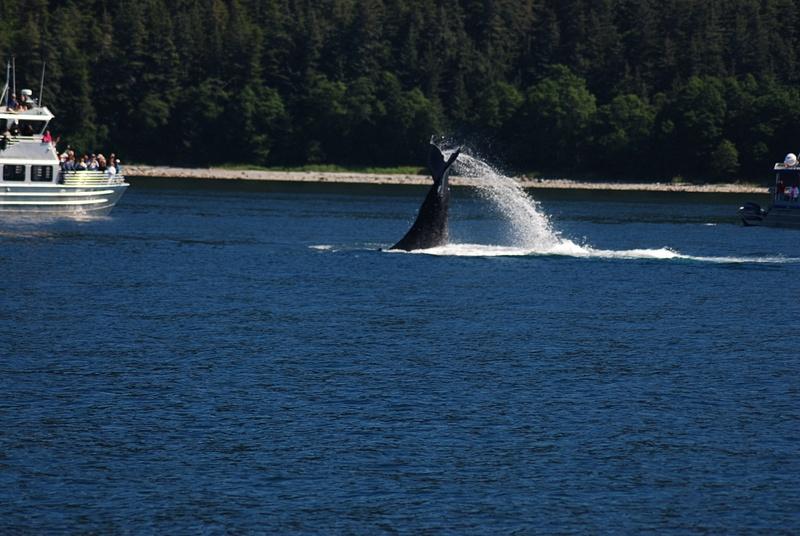 3 Juneau_WhaleWatching (39)