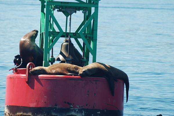 3 Juneau_WhaleWatching (46) by Verryl V Fosnight Jr