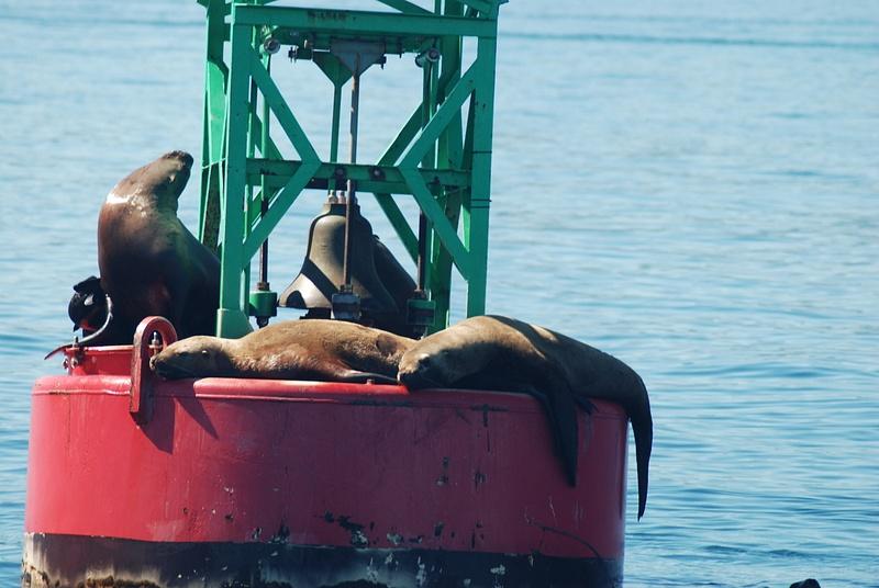 3 Juneau_WhaleWatching (46)