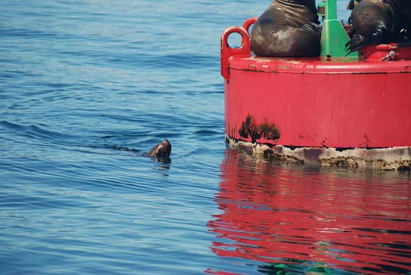 3 Juneau_WhaleWatching (48)