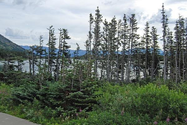 4 Skagway&YukonRouteRR  (35) by Verryl V Fosnight Jr