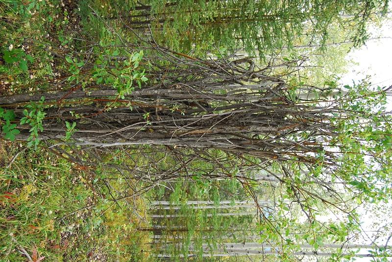 10 WildernessWalk from CuRLodge  (24)
