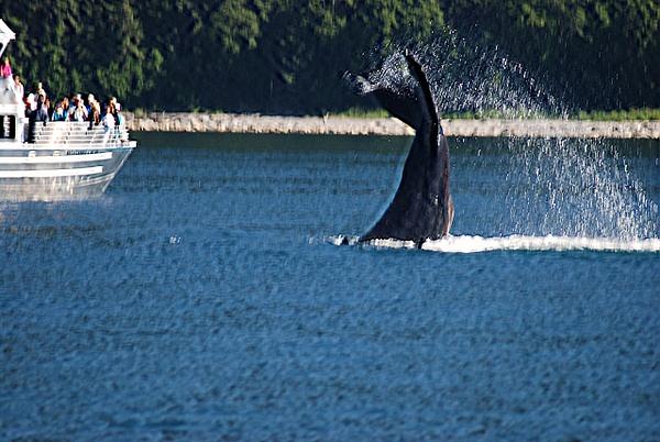 3 Juneau_WhaleWatching (40) by Verryl V Fosnight Jr