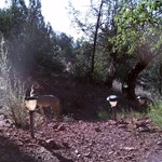 Wildlife Cameras in Sedona