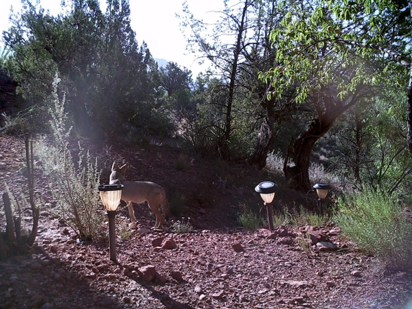 Wildlife Cameras in Sedona by Verryl V Fosnight Jr