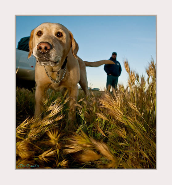 Hunting Dog by Gino De  Grandis