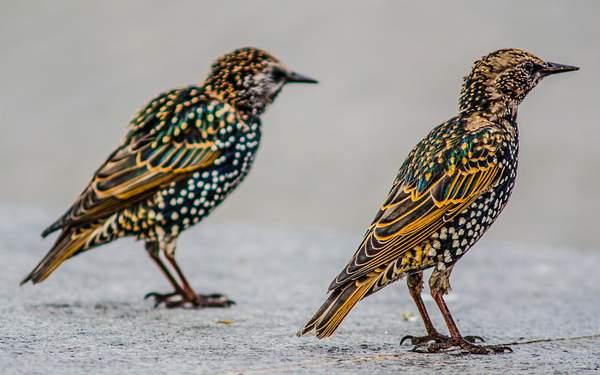 Birds Conversation