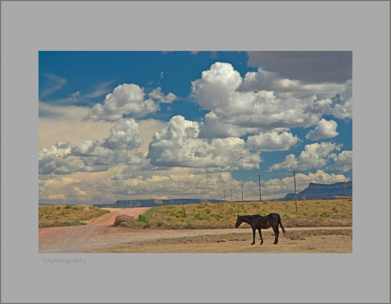 Solitary Horse -Indian Reservation -Arizona 106 F Temperature