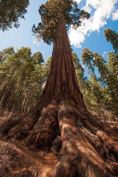 Yosemite Park by Gino De  Grandis
