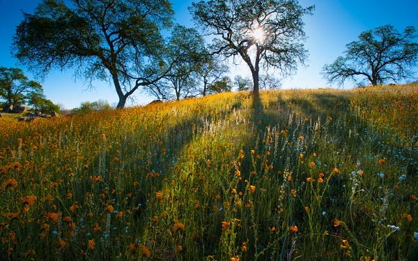 Central California by Gino De  Grandis