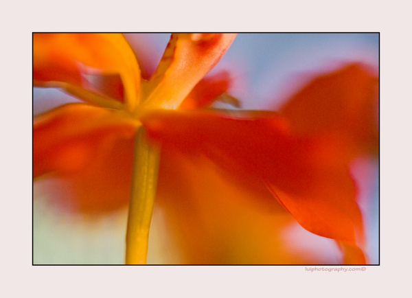 Spring flower by Gino De  Grandis