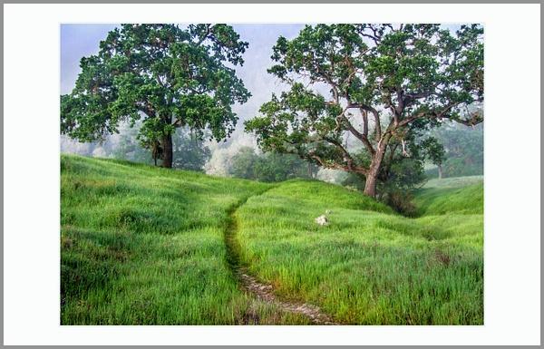 The Serene Path by Gino De  Grandis