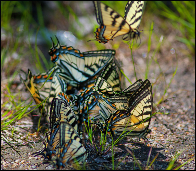 Butterflies Meeting