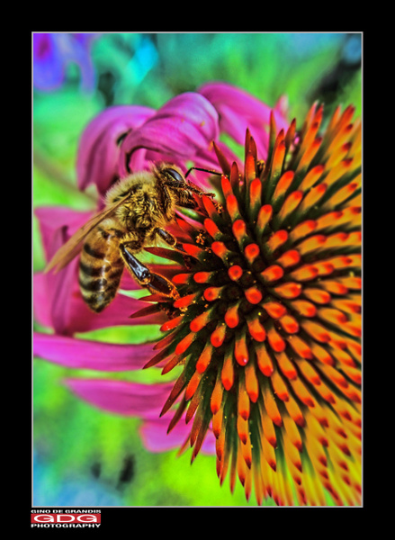 A Bee by Gino De  Grandis