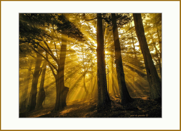 First_Morning_Lights by Gino De  Grandis