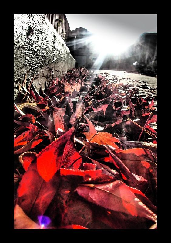 Leaves Meeting