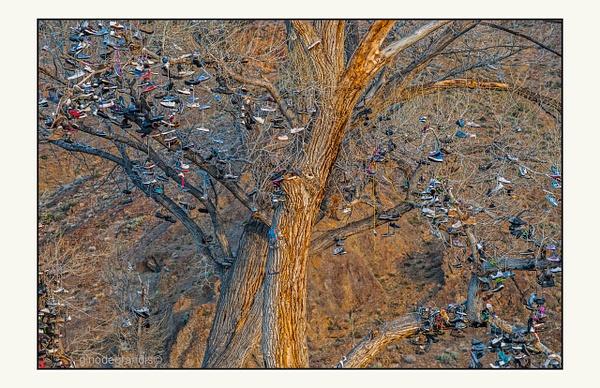 Unhappy Tree by Gino De  Grandis