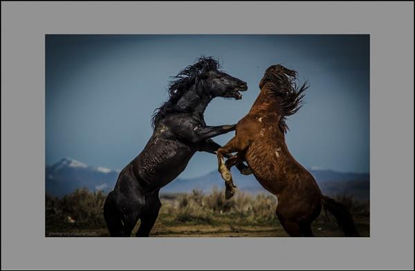 Wild Horses by Gino De  Grandis