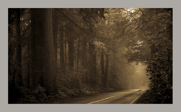 The Forest  Road by Gino De  Grandis