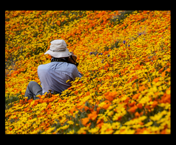 California is blooming by Gino De  Grandis