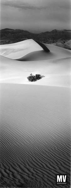 Bush & Dune - DVNM