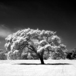 Landscape: Silver-Based B&W Panorama Prints