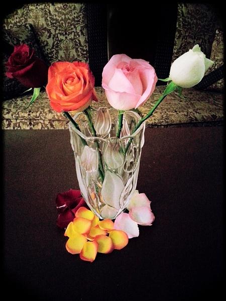 Flower rose by AliNari