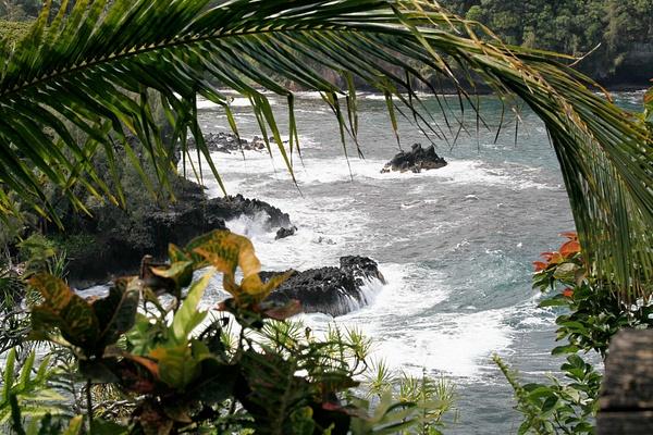Hilo Botannical Garden, Big Island by Harrison Clark by Harrison Clark