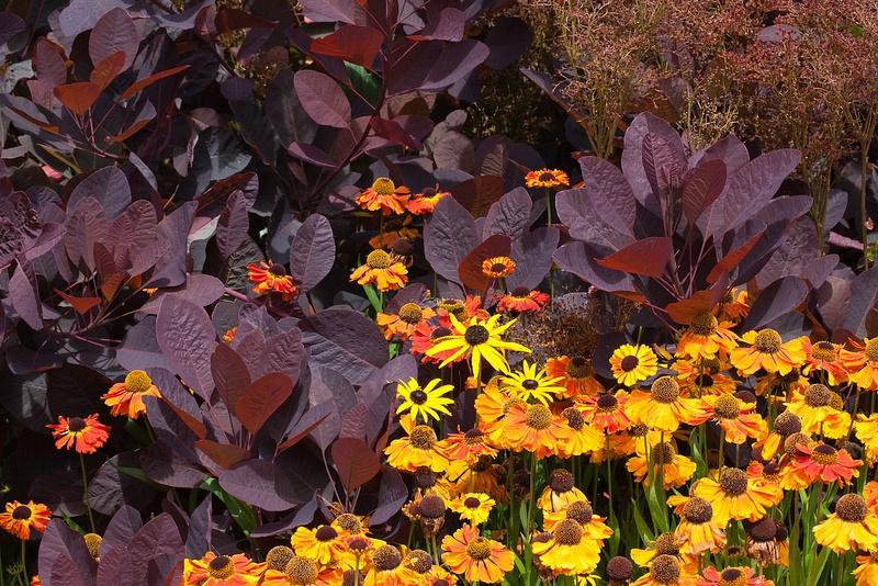 Fort_Bragg_Botanical_Gardens-21