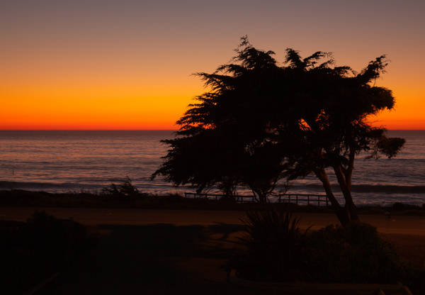 Tree & Setting Sun on Moonstone Beach.jpg by...