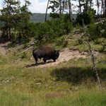Yellowstone & Cody WY