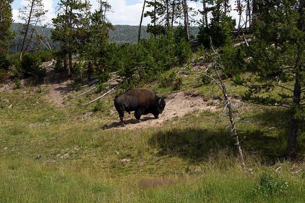 Yellowstone & Cody WY by Harrison Clark