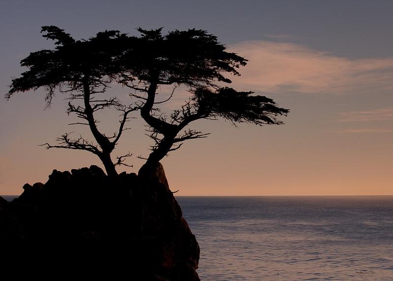 Famous Tree.jpg