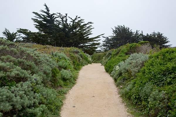 Point Lobos-22