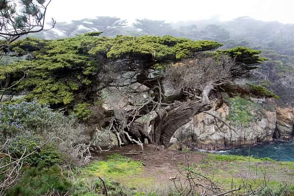 Point Lobos-17