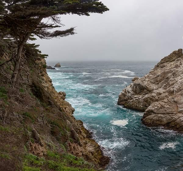 Point Lobos-15