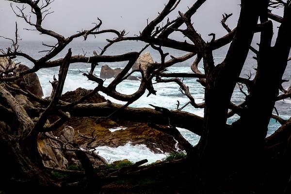 Point Lobos-11