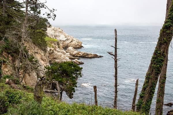 Point Lobos-7