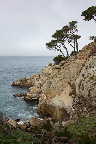 Point Lobos-6