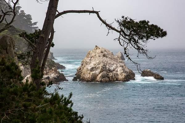 Point Lobos-5