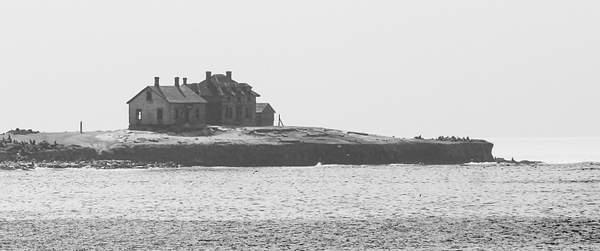 Old Sea lions Home on Año Nuevo Island-Edit