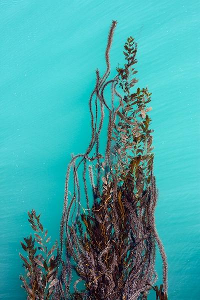 San Simeon Pier Seaweed-1.jpg by Harrison Clark