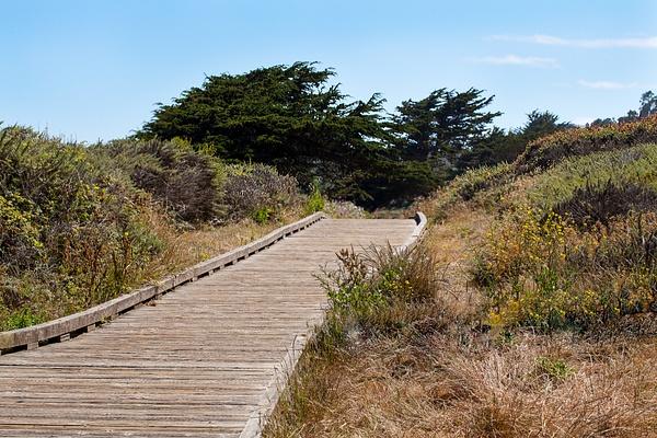 Boardwalk to Cypress Grove.jpg by Harrison Clark