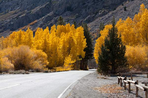 June Lake Loop in Fall