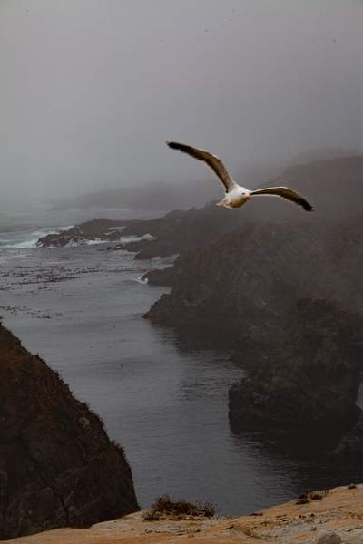 Fog With Seagull