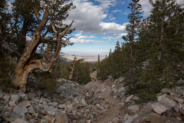 Great Basin NP-2