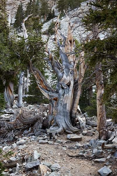 Great Basin NP-3